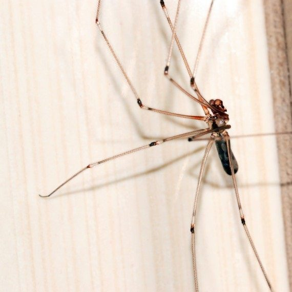Spiders, Pest Control in North Watford, WD24. Call Now! 020 8166 9746